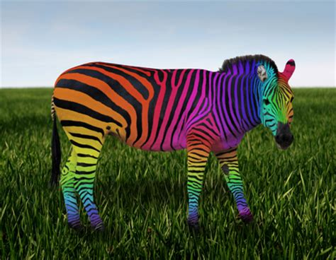 what color is a zebra rainbow zebra zebras animals background wallpapers on