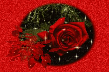 hareketli güller, çiçek resimleri, en güzel resimler