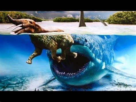 real megalodon shark sightings! biggest sharks of all time