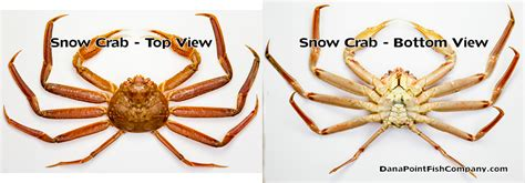 the hunt for snow crabs deadliest catch discovery image gallery opilio crabs
