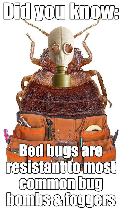 bomb for bed bugs bed bugs are resistant to most common bug bombs and