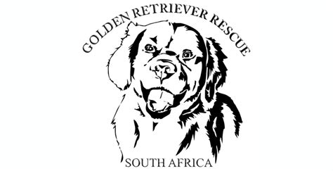 golden retriever breeders south africa golden retriever rescue south africa pethealthcare co zagolden retriever rescue