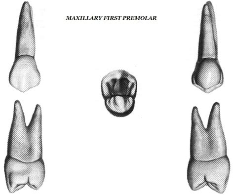 Maxillary Premolar Dentistry Lectures For Mfds Mjdf Nbde Ore A Note On