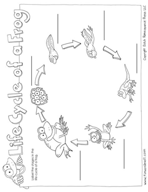 frog life cycle worksheet tim van de vall
