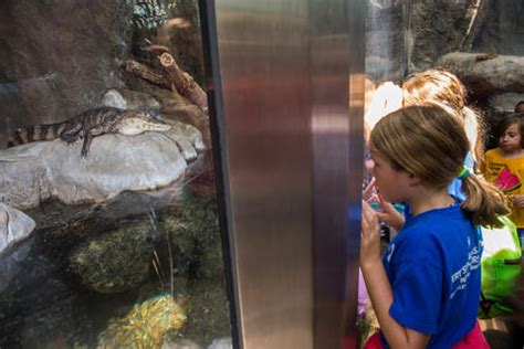 Chicago Reptile House by Photos Lincoln Park Zoo Chicago Tribune