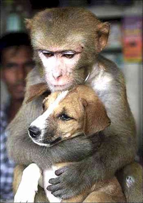 monkeys dogs 10 potentially big bad animals kept as pets webecoist