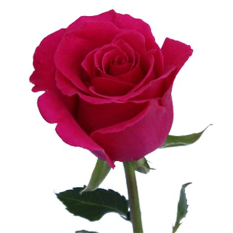 Vintage Flower Vases Wholesale Lady Pink Rose