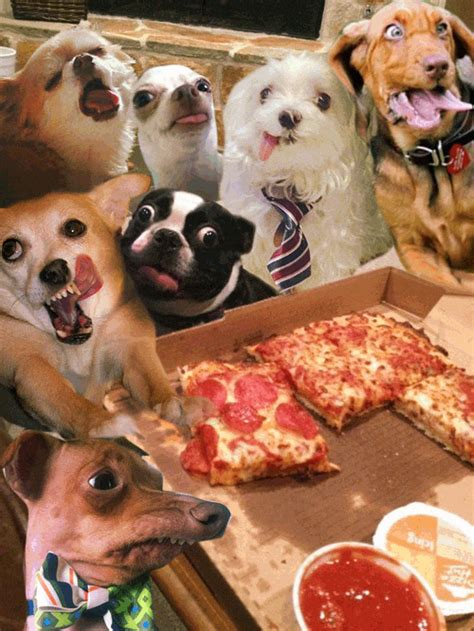 pizza puppy gif cat crashes pizza boing boing