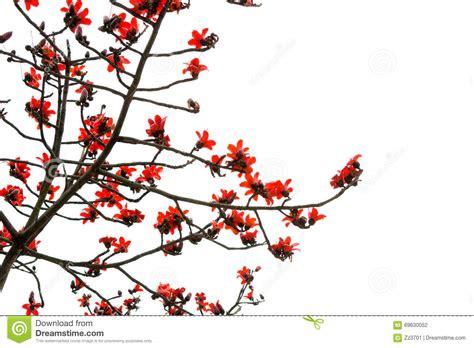 rami e fiori fiori capoc con i ramoscelli ed i rami