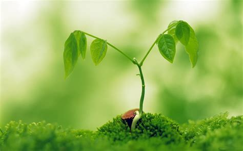 plant wallpaper the 10 nature green color hd wallpapers good for your
