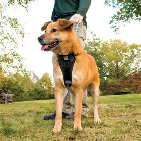 best dog harness 10 best dog harness options for your dog pet territory