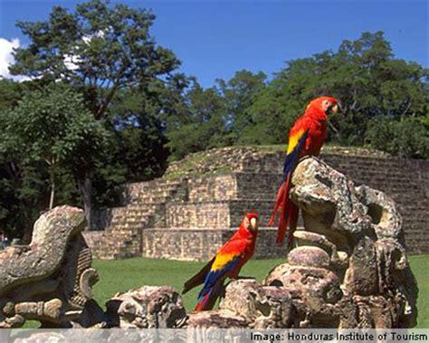 imagenes de los mayas de honduras honduras animals wildlife in honduras
