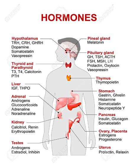 diagram of endocrine system human glandular system diagram anatomy list