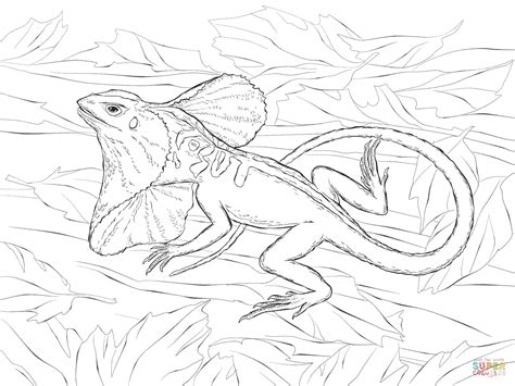 frilled lizard coloring pages realistic frill necked lizard coloring page free