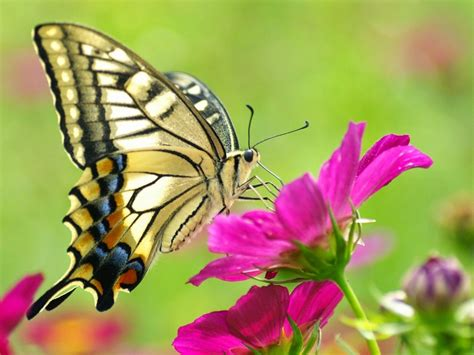 mariposas pics banco de imagenes y fotos gratis imagenes de mariposas