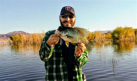 angler report alamo lake fish az
