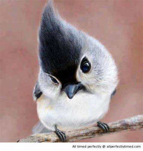 Has A New Hairdo by Bird Has A New Hairdo A New Hairstyle Trend Is Happen