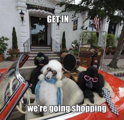 Shopping Meme - funny jokes shopping