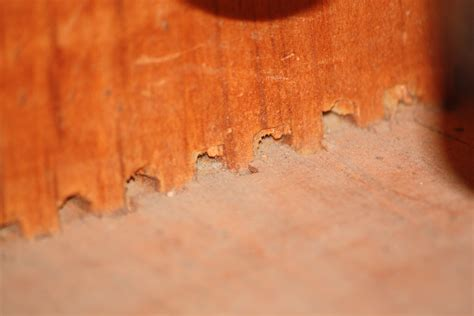 Tweed Champ Cabinet 1959 Tweed Fender Champ Wood Cabinet My Fender Champ