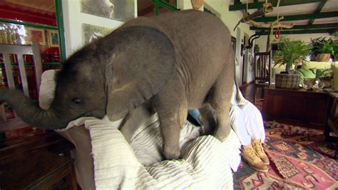 Nature S Miracle Orphans Baby Elephant Causes Havoc At Home Nature S Miracle Orphans Series 2 Episode 1 Preview