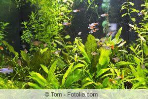Teichpflanzen Gegen Algen 1301 by Teichpflanzen Gegen Algen Einsetzen Pflege 220 Berwintern