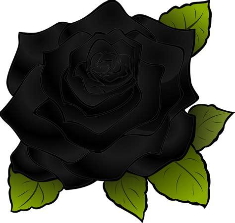 free vector graphic rosa flower black black rose
