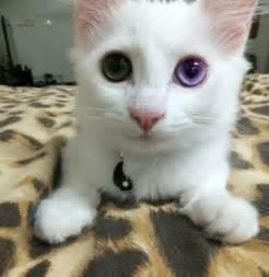 kitten eye color 緑と紫の瞳が美しいにゃんこ ケンボーのブログ