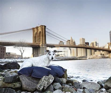 good dog beds den do good dog beds 187 gadget flow