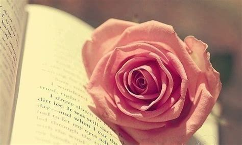 the roses books and a book pictures photos and images for