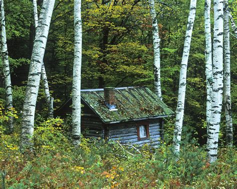 Mountain Cabin Plans log cabin in the birch forest vermont photograph by joe
