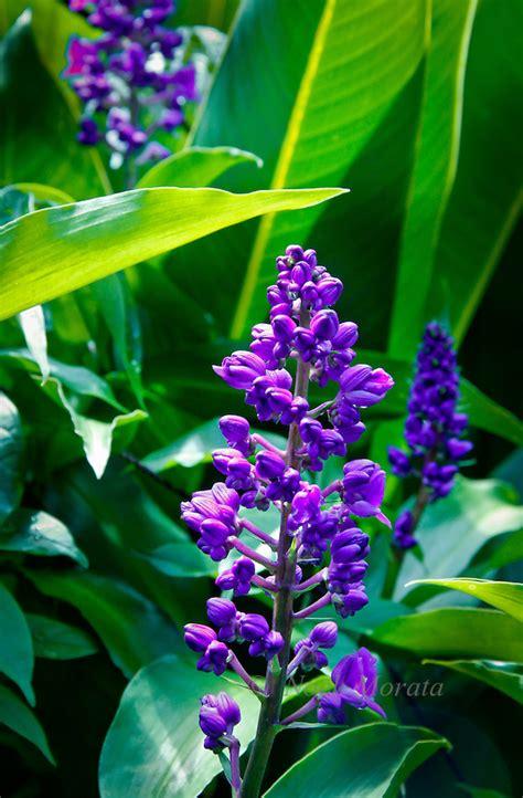 tropical flowers and plants hawaiian tropical gardens noel morata photography