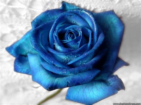 best blue desktop wallpapers 187 flowers backgrounds 187 best rose aqua