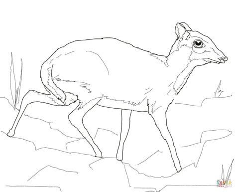 Deer Mouse Coloring Page | lesser mouse deer coloring page free printable coloring