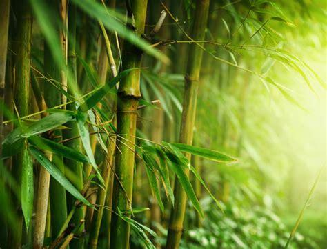wallpaper daun bambu why bamboo bamboo living homes