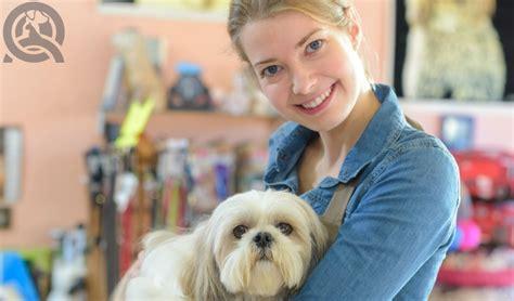 groomer salary 5 career paths for certified groomers qc pet studies