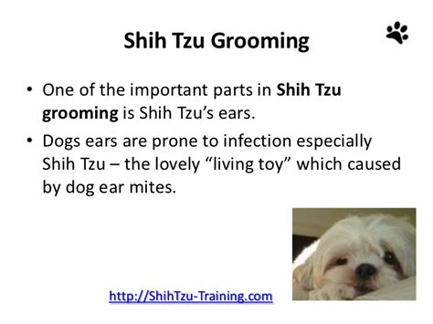 shih tzu ears shih tzu grooming grooming and caring for shih tzu ears