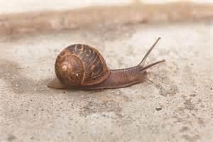 venda de carac 243 is all about snails 8