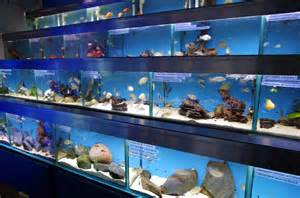Visit our London shop for Aquariums / Fish Tanks, Marine, Tropical