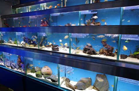 aquarium design great portland street visit our london shop for aquariums fish tanks marine