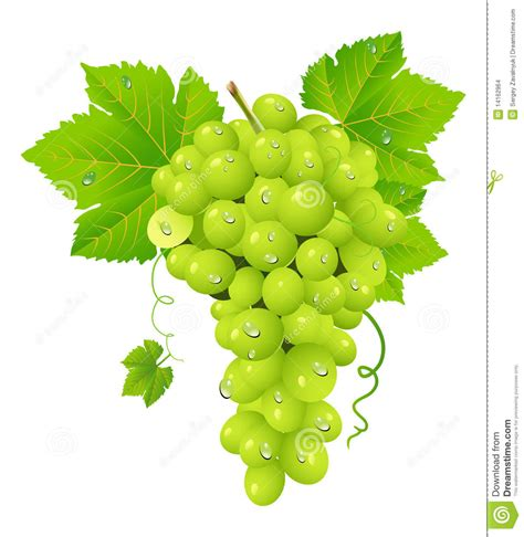 the gallery for gt single grape vector