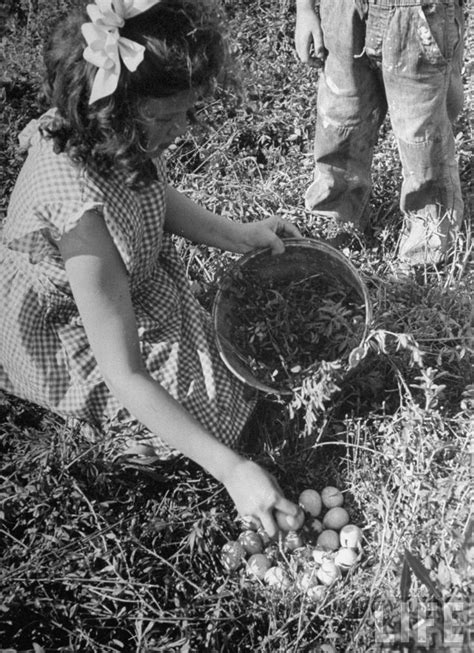 farm to kansas city 1000 images about farmers on pinterest old photos