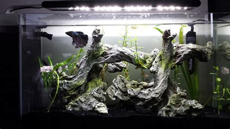 betta aquascape 17 best images about aquascaping fish tank on pinterest fish tanks flora and