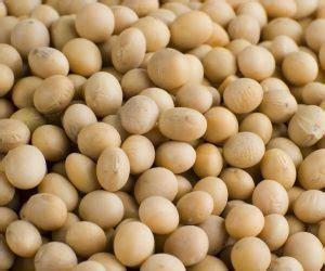 alimenti con calcio alimenti contengono calcio ecco i 15 vegetali ne