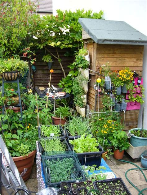 vertical vegetables grow    small garden