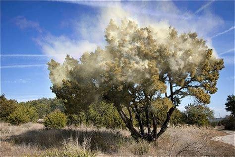 allergy tree tree allergy