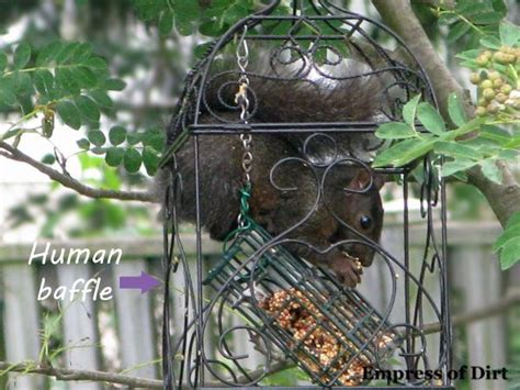 squirrel proof bird feeder how to make woodworking