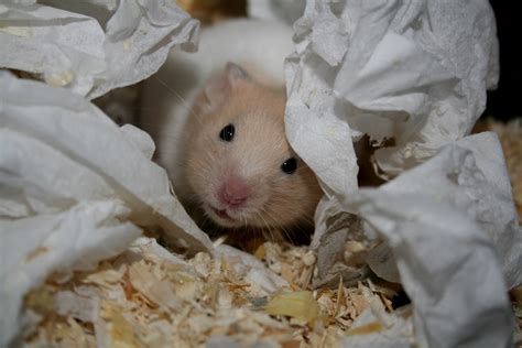 hamster bed nesting box the truth about hamster cages