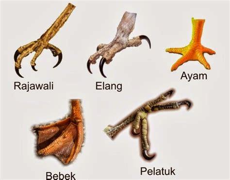 kop kaca kaki 2 by sumber hidup all about science mengenal berbagai macam adaptasi