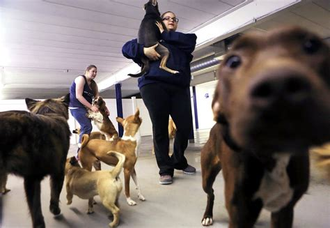 the woof room minimum wage hike stirs worry among minnesota s not so small businesses minnesota radio