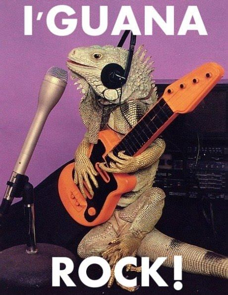 Funny Rock Memes - funny animal pictures 187 rockstar